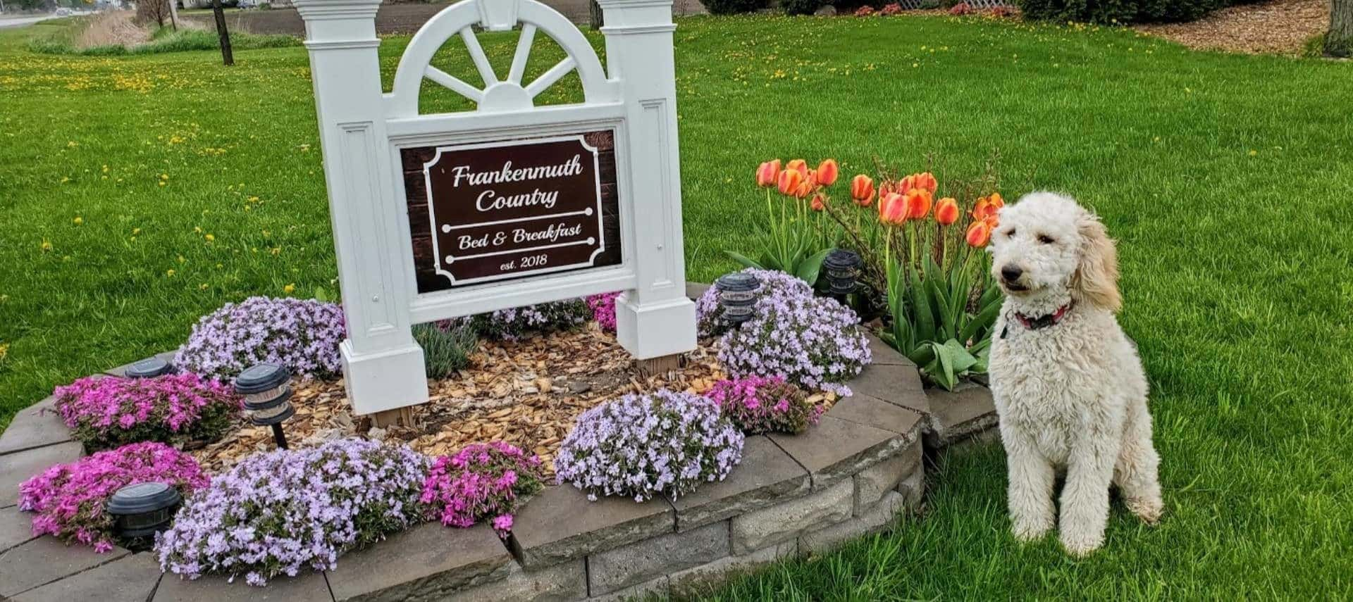 Welcome sign for the property surrounded by orange, purple, and pink flowers in raised stone garden bed surrounded by green grass with white dog posing near by